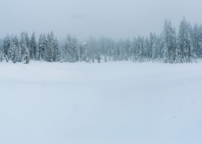 Winter Woods_20161209_00074-Pano-Edit